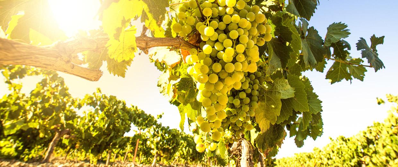 Barcelona Mediterranean Wine | Viticultores y elaboradores de vinos y cavas reconocidos con alta calidad situados en el Penedès.