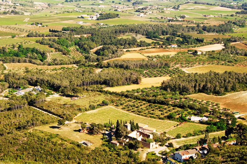 Bodega Barcelona Mediterranean Wine | Descubre nuestros vinos y cavas de calidad y de Denominación de Origen